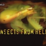 Насекомые дьявола - Insects from hell